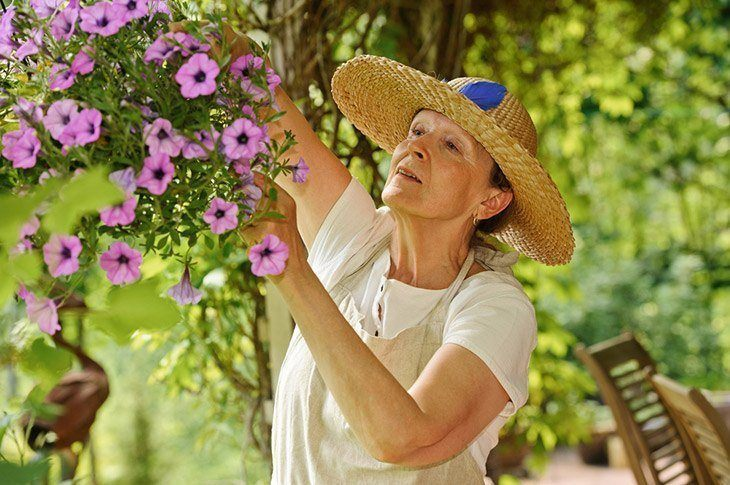 A-woman-taking-care-of-hanging-petunias-how-to-deadhead-petunias