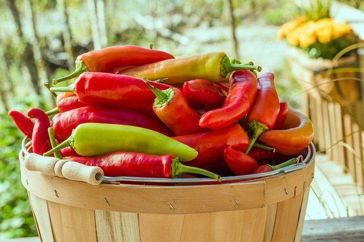 Different-types-of-banana-pepper-when-to-pick-banana-pepper