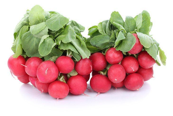 Fresh-red-radishes-in-a-plate-how-to-store-radishes