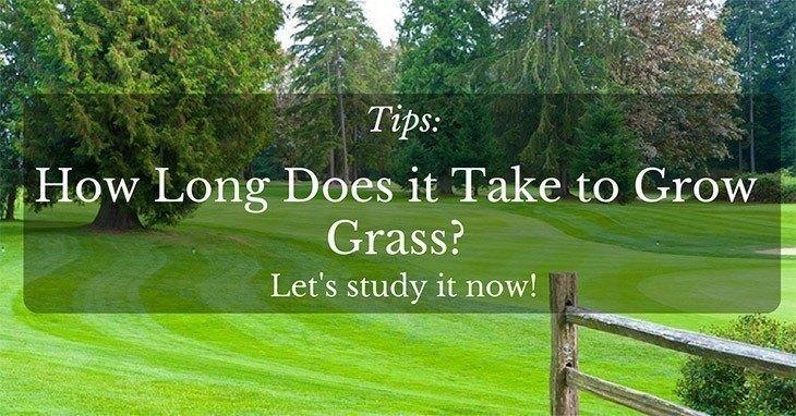 how to make grass grow back