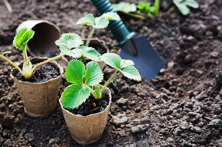 When to Transplant Seedlings: Learn All You Need to Know