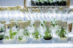 Testing the process of photosynthesis