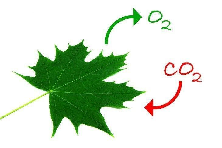The-process-of-photosynthesis-Human-taking-care-of-nature-why-is-photosynthesis-important