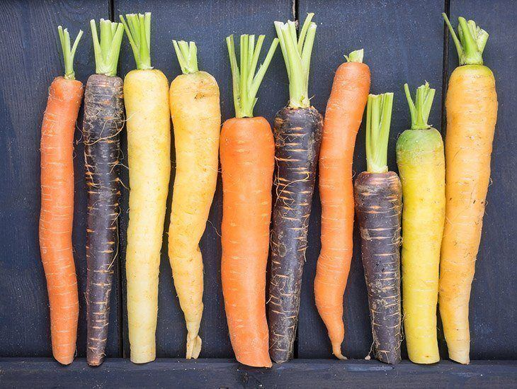 Types-of-carrots-what-does-carrot-sprout-look-like