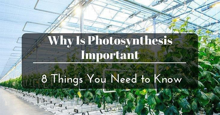 Why-Is-Photosynthesis-Important
