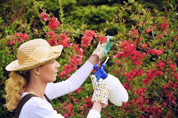 Woman-taking-care-of-her-plants-how-to-get-rid-of-mealybugs