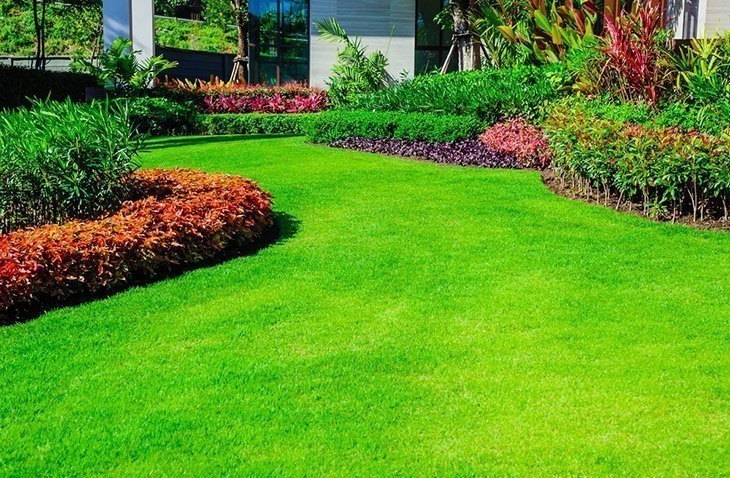 A-lawn-full-of-thick-lush-grass-how-long-for-grass-seed-to-germinate