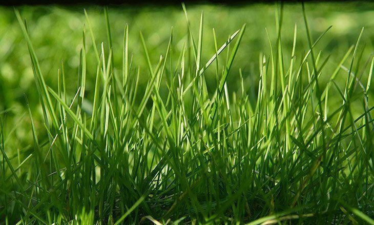 Focus-on-green-full-grass-how-to-keep-birds-from-eating-grass-seed