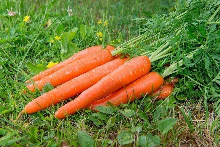 Group-of-carrots-lay-on-grass-How-Long-Do-Carrots-Last