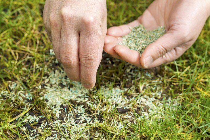 Hand-holding-palmful-of-grass-seeds-how-to-keep-birds-from-eating-grass-seed