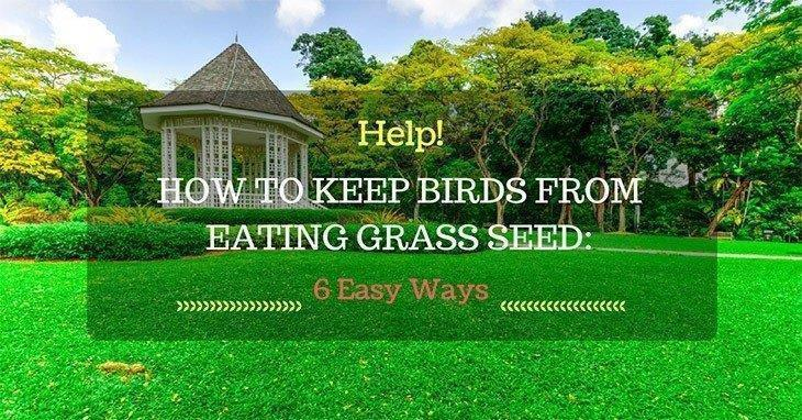How-to-Keep-Birds-from-Eating-Grass-Seed