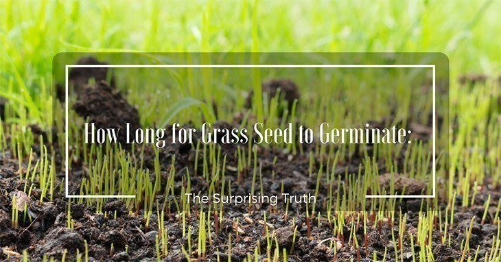 Newly planted grass seed sprouting_How Long for Grass Seed to Germinate