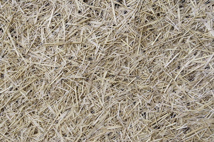 Straw-covering-grass-seed-to-germinate-how-to-keep-birds-from-eating-grass-seed