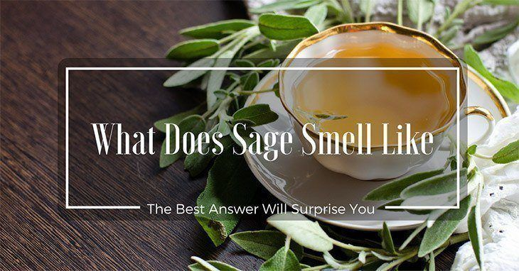 What Does Sage Smell Like