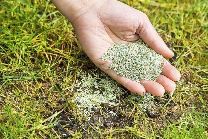 Woman hand full of grass seed _How Long for Grass Seed to Germinate