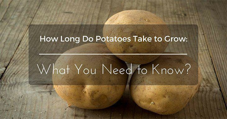 How Long Do Potatoes Take to Grow