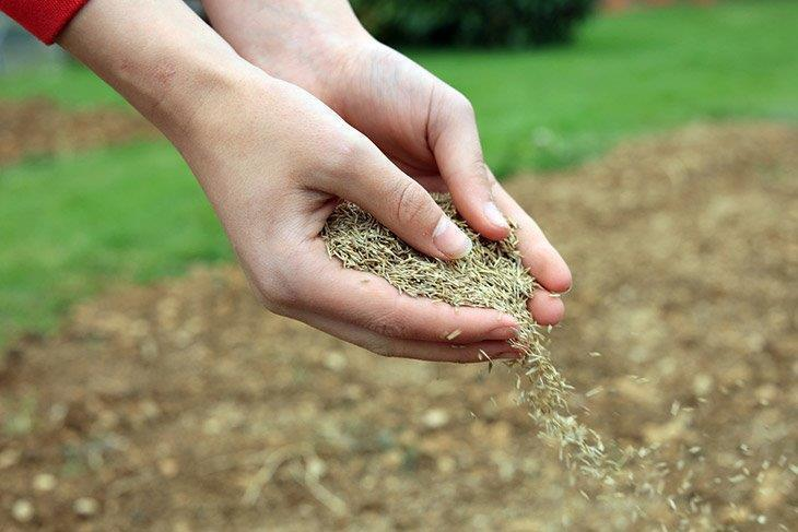 Spreading-grass-seed-by-hand-how-to-kill-dallisgrass