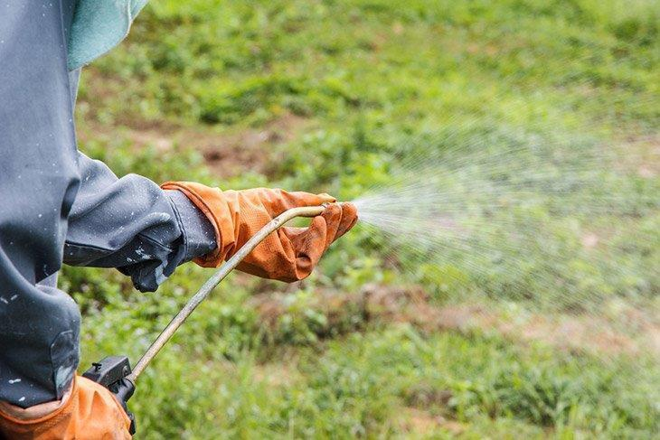 Spreading-herbicides-in-lawn-with-weeds-how-to-kill-dallisgrass