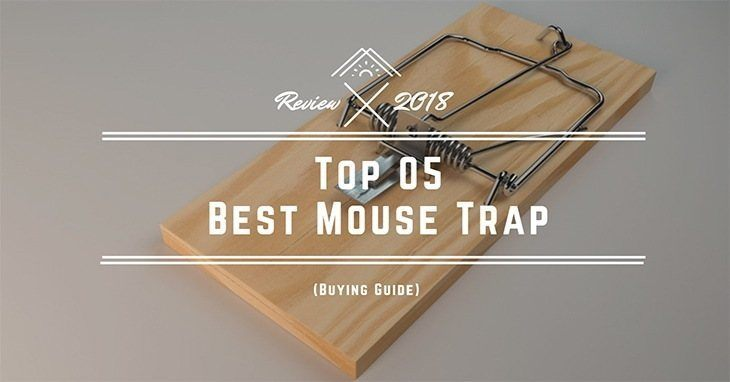 Top-05-Best-Mouse-Trap-Bait