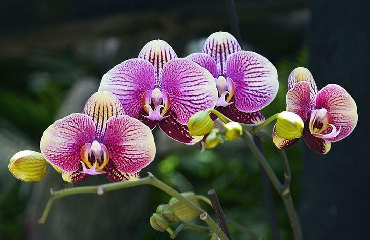 A-Phalaenopsis-orchid-flower-in-a-tropical-garden-How-to-Transplant-Orchids