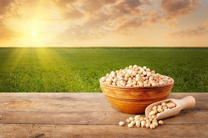 Chickpea-grains-in-a-bowl-on-the-wooden-table,-field-of-chickpeas-as-the-background-how-to-grow-chickpeas