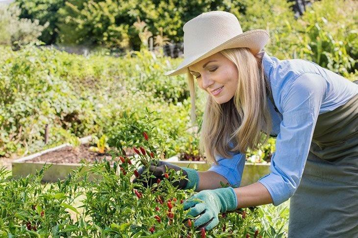 A-woman-in-a-pepper-garden How-to-Prune-Pepper-Plants