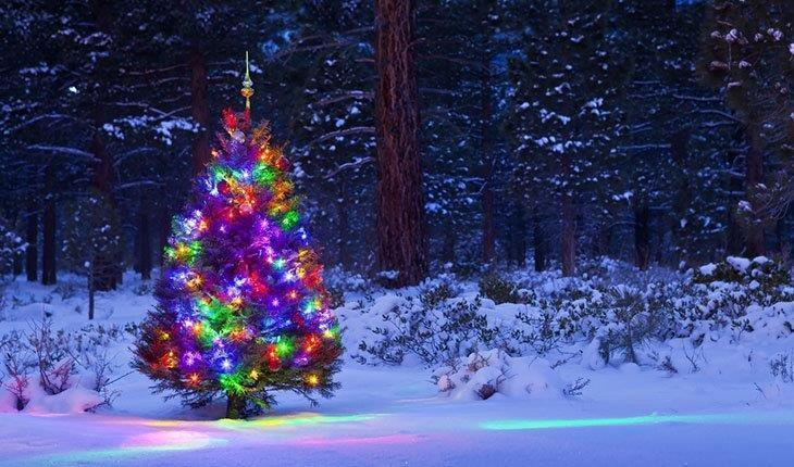 Outdoor-Christmas-Tree-with-Lights-outdoor-Laser-Lights