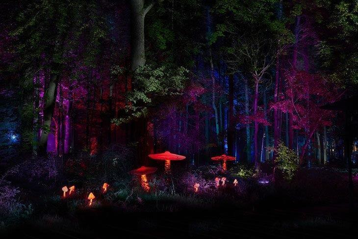5 Best Outdoor Laser Lights Reviews 2019