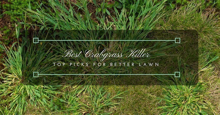 Best-Crabgrass-Killer