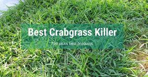 Best-Crabgrass-Killer