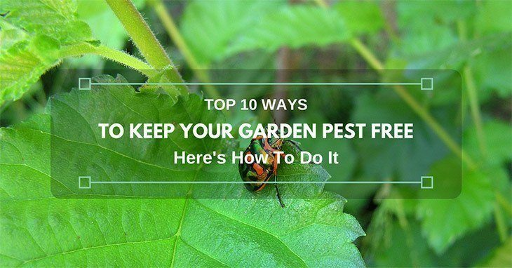 10-Ways-to-Keep-Your-Garden-Pest-Free