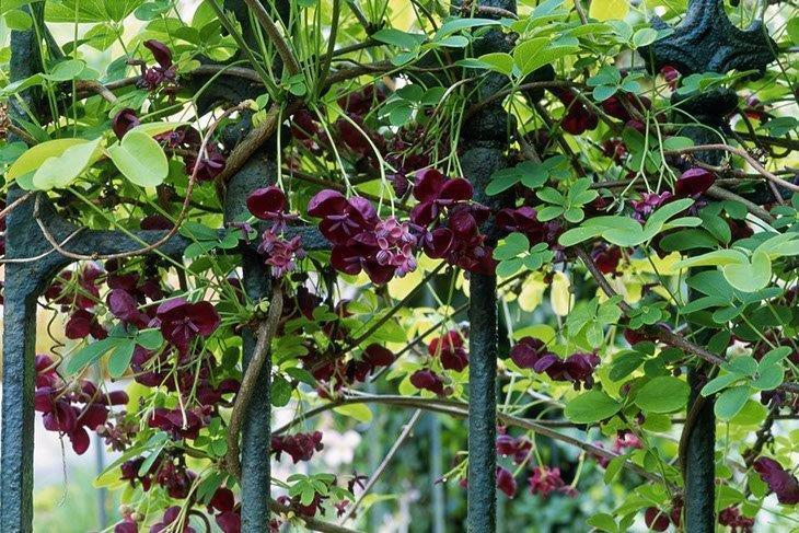 5 Best Climbing Plants for Trellises: Should Have In Your Garden!