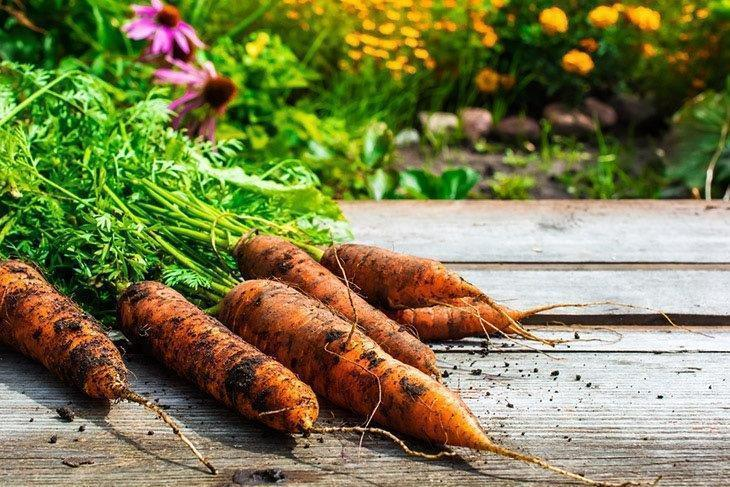 Freshly-harvested-carrot-How-to-Tell-If-Carrots-Are-Bad