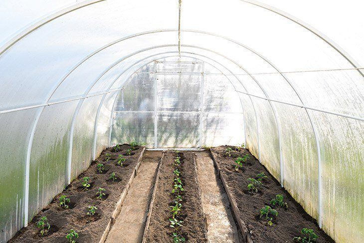 Inside-a-greenhouse