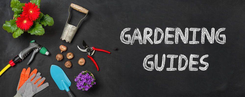 Best Gardening Guides