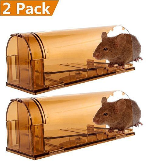 top 05 best mouse trap reviews in 2019 how to choose the perfect mouse trap. Black Bedroom Furniture Sets. Home Design Ideas