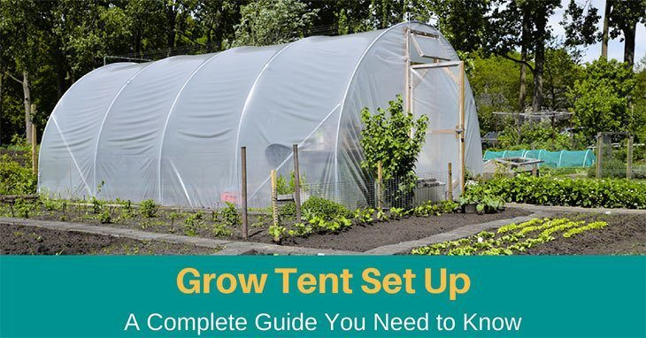 Grow Tent Setup, 2019: A Complete Guide You Need to Know