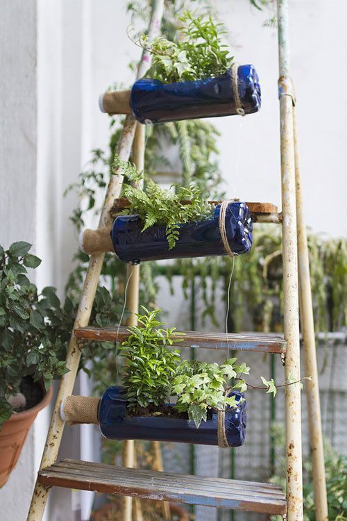 Plants hanging on an old ladder