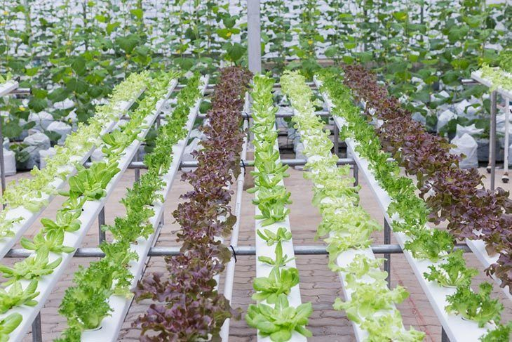 Hydroponics-system-greenhouse-and-organic-vegetables-salad-in-hydroponics-farm-for-health,-food-and-agriculture-concept-design
