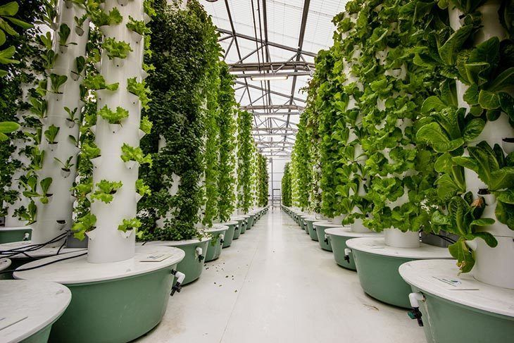 Plants-growing-at-an-aeroponic-food-farm