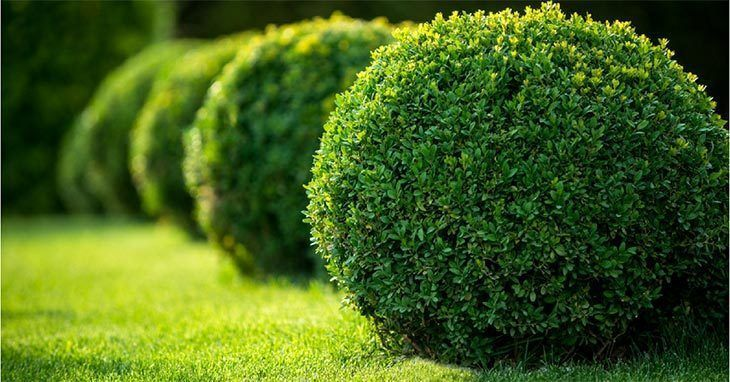 Shrubs and green lawns