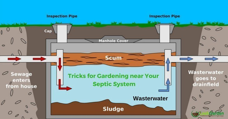 Tricks-for-Gardening-near-Your-Septic-System-Septic-Tank-Diagram