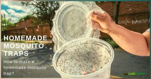 best-homemade-mosquito-trap