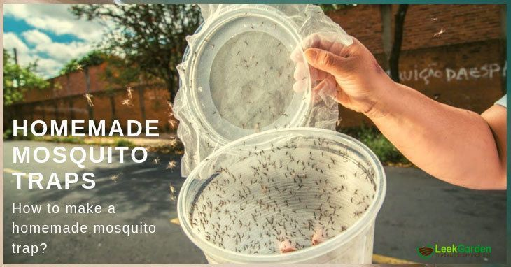 best homemade mosquito trap