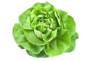 Winter-Lettuce