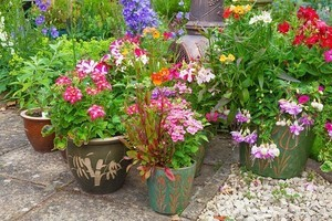 Group of plant containers with colorful summer flowers