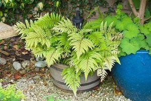 Planter contains shade-loving plants