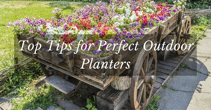 Top Tips for Perfect Outdoor Planter Ideas
